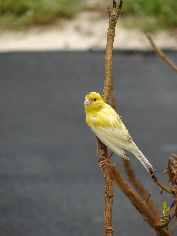 Adını köpekten alan kuş 1