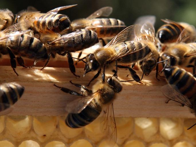 Katil arılardan nasıl kaçarsınız? 1