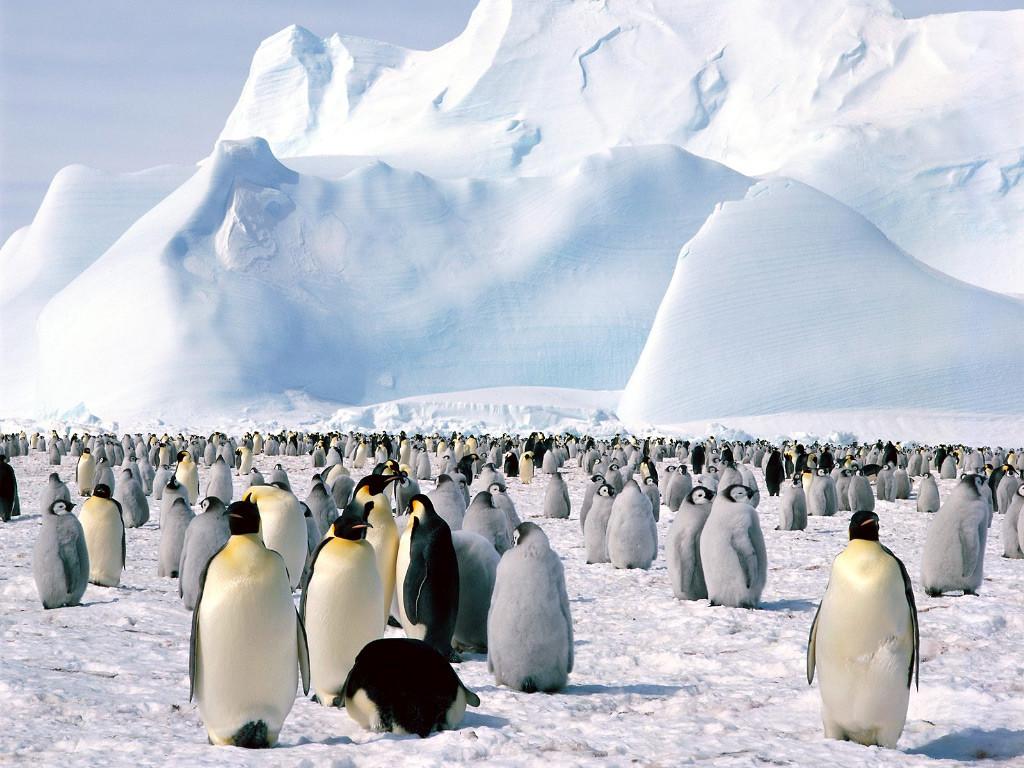 Antarktika_003