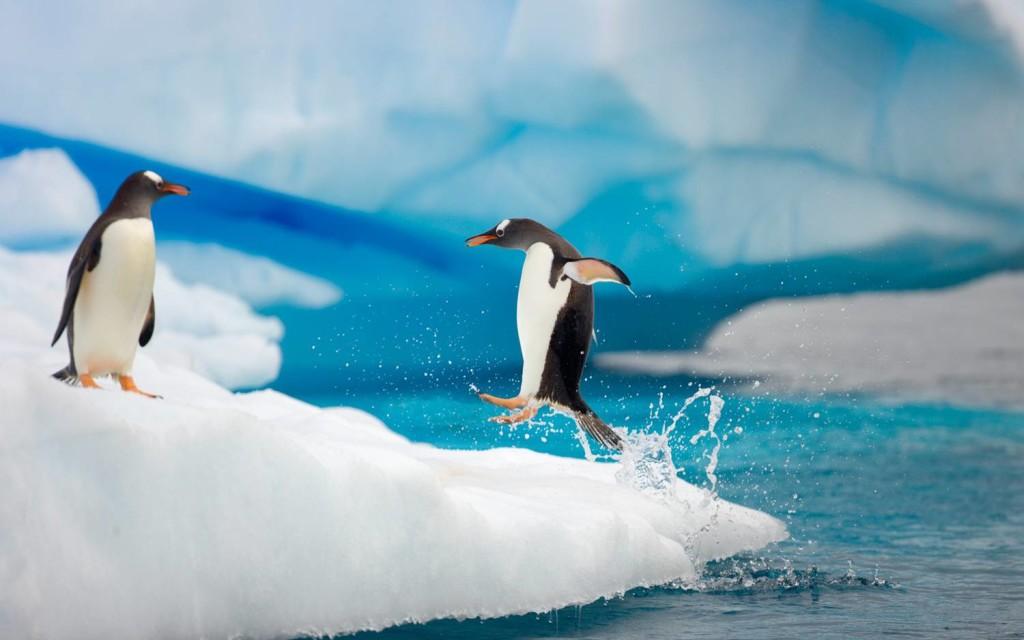 Antarktika_004
