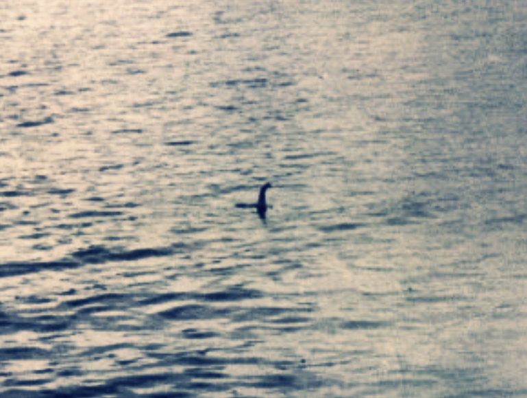 Nessie'nin en ünlü fotoğrafı 1