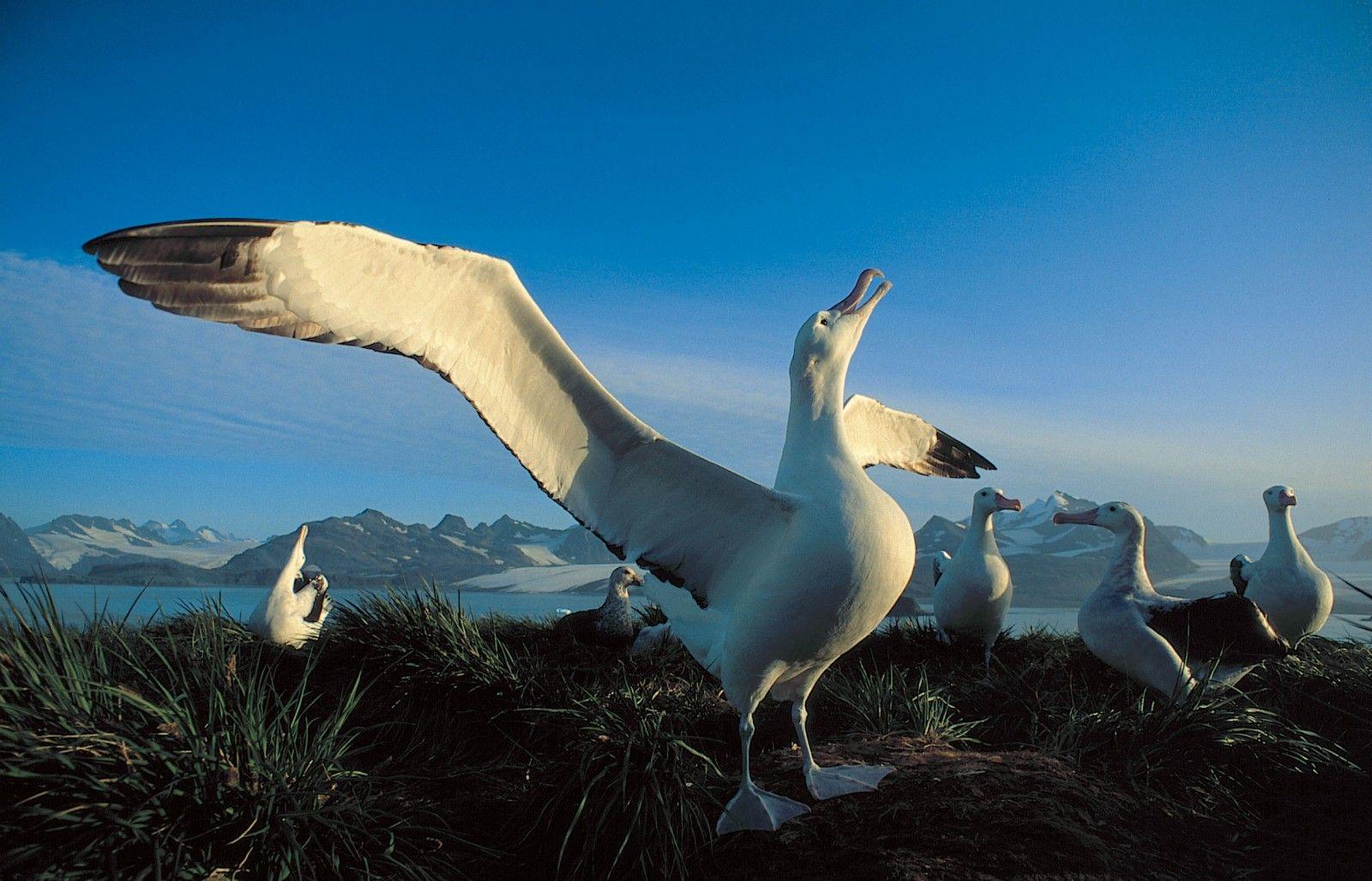 Her kelimenin bir hikâyesi var: albatros 1