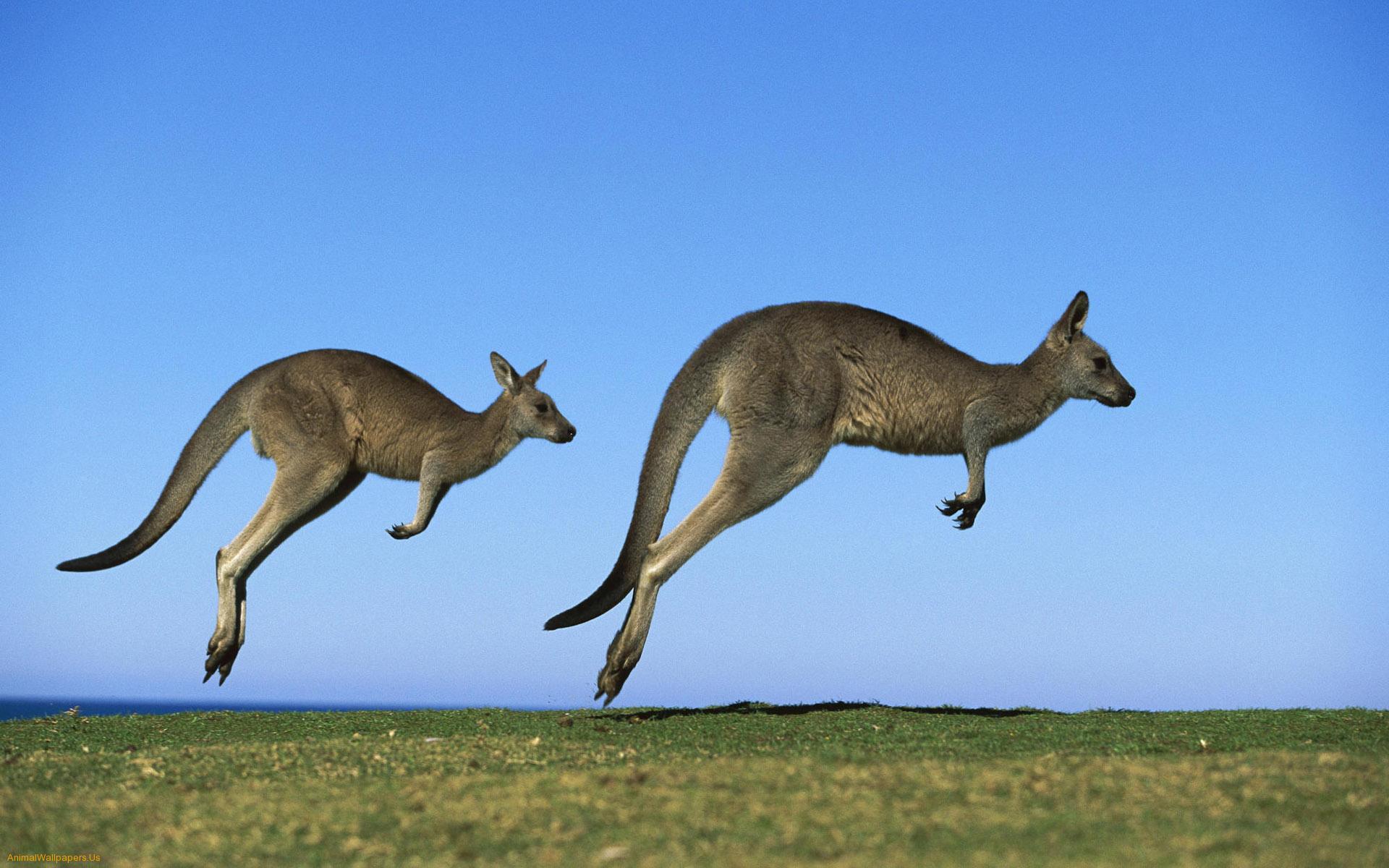 Her Kelimenin Bir Hikâyesi Var: Kanguru 10